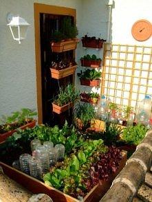 mikro ogród