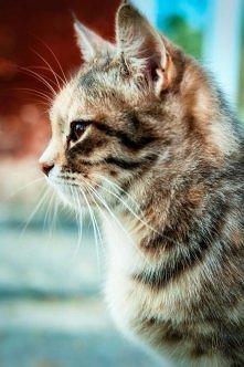 Zamyślony kot...