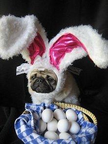 świąteczny królik=)
