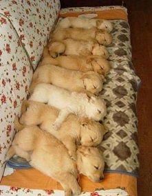 sleep time=)