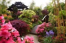 Spring Pagoda
