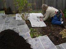 Weź gazety i rozłóż warstwą...