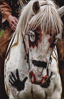 painted horse, beautiful...