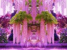 wisteria w ogrodzie japońskim