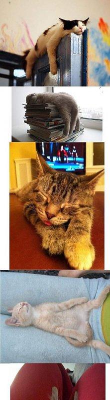 kolekcja kotków na wszelkie...
