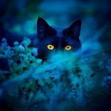Tajemniczy kot...