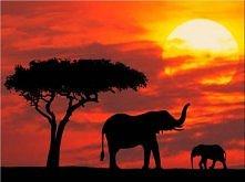 Kenia - Afryka