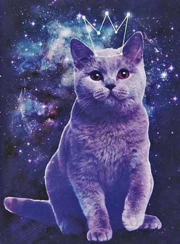 galaxy cat na a n i m a l s zszywkapl