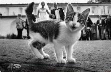 Kot: Weselicho! Trzeba zrob...