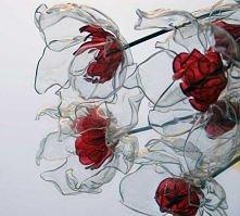 pet kwiat