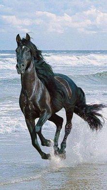 czy mamy na zszywcę uwielbiacze koni?