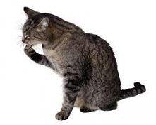 Jak dbać o kota? Kliknij w ...