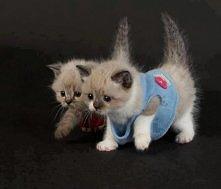 Małe kotki.