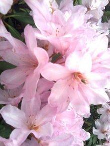 kwiaty kwiaty