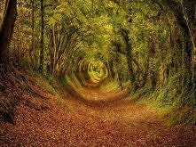 Ashdown Forest, West Sussex, Anglia