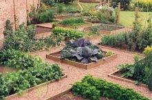 Ogródek warzywny :)