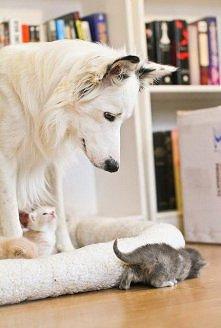 dawka miłości=)