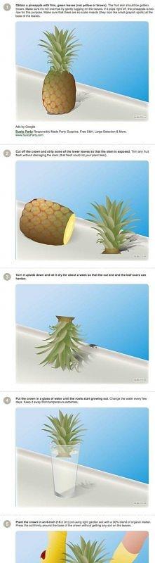 egzotyczna roślinka w  doni...