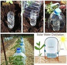 nawadnianie roślinek