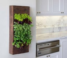 herb living wall for the kitchen