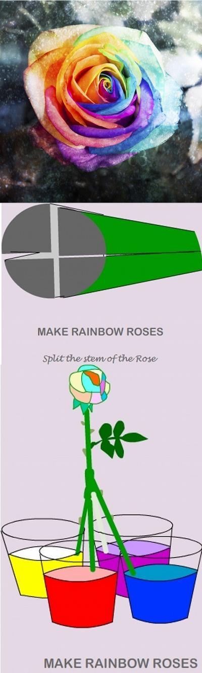Jak zrobić tęczową różę