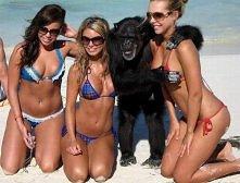 takie zaskakujące zdjęcie na plaży...