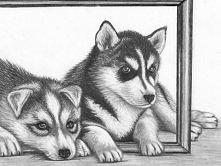 Husky niby tylko pies , jakaś tam rasa , a przyjaciel na wiele , wiele lat :)