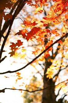 piękna jesien :)