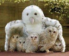 Rodzinka w komplecie ;)