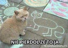 uwielbiam tego kota ♥