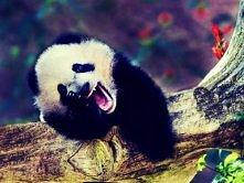 Panda ^_^