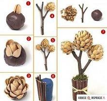 pistacjowe drzewko