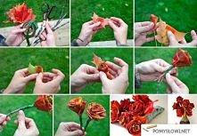 Piękne jesienne róże :)