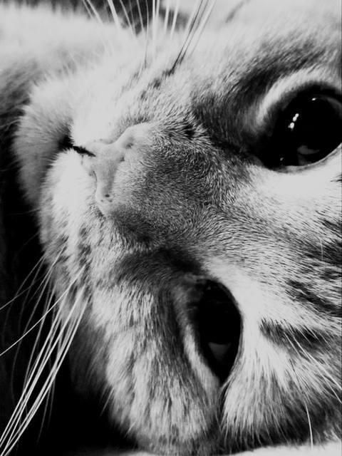 ... kocie oczkaaa <3
