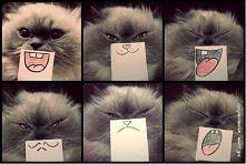 tak się bawi z kotem ;P