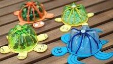 żółwiki