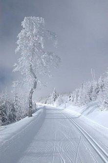 chcę taką zimę