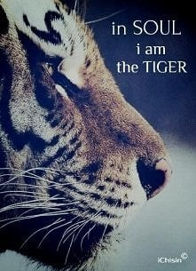 in soul i am the tiger.