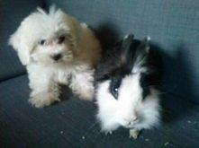 Luca & Fibi