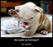 Nie byłeś na treningu ?! ha ha ha