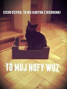 Tak bardzo mój kot XDD