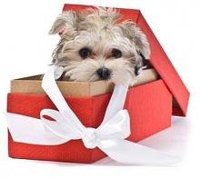 Pamiętajmy że zwierzaki to nie zawsze odpowiedni prezent :)