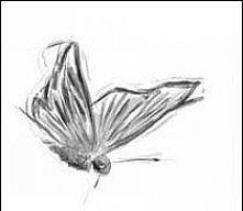 Motyl...