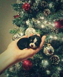Świąteczne maleństwo :)