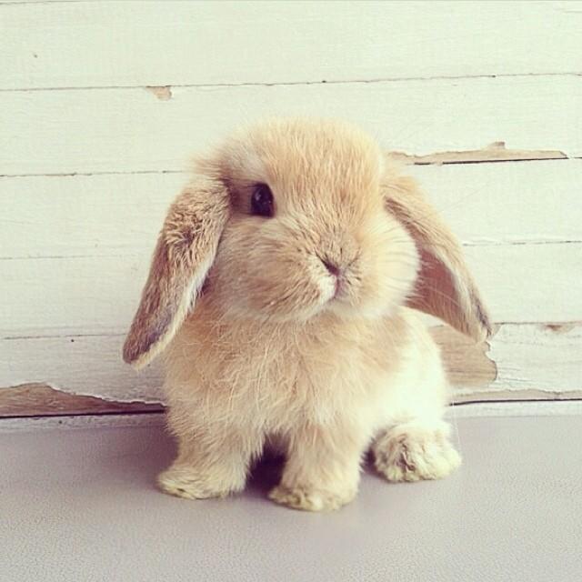Znalezione obrazy dla zapytania króliczek