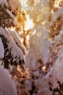 *** las zimą ***