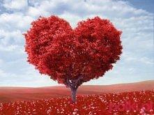 w Walentynki nawet drzewa tak wygladają... :D