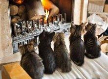szczęście jest wprost proporcjonalne do ilości posiadanych kotów ;3