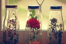 kwiatki :3