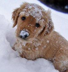 w śniegu:)
